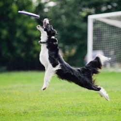 dog-tricks